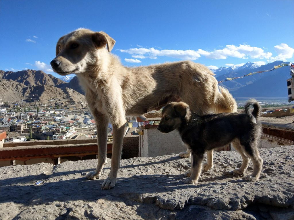 dogs_in_the_himalayas