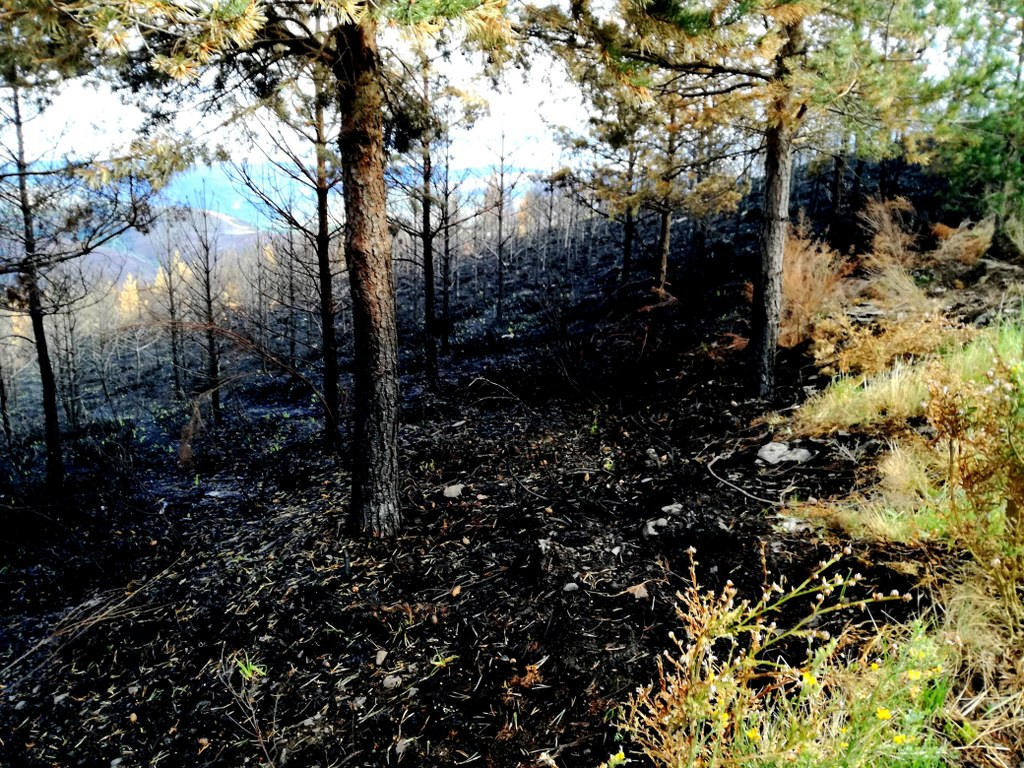 black_scorched_earth_in_the_forest_after_an_outbreak