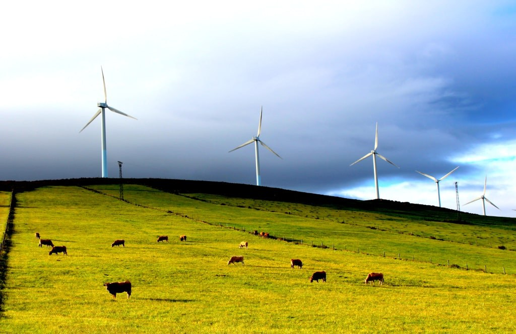 green_valley_with_black_and_red_cows_and_huge_windmills