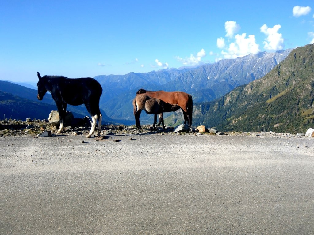 horses_standing_on_an_edge_of_a_mountain