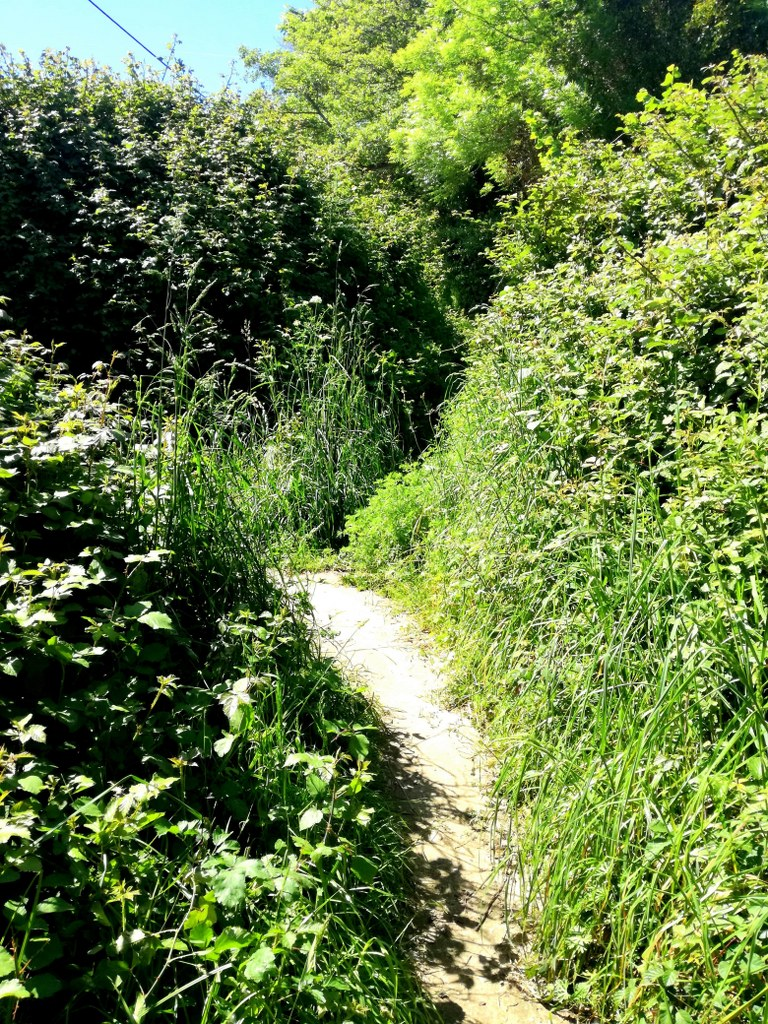 narrow_green_path_leading_to_a_forrest