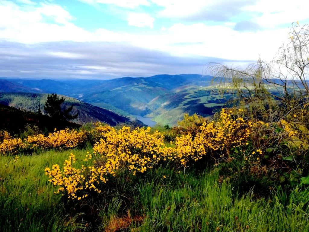 yellow_plants_growing_on_mountain_hills