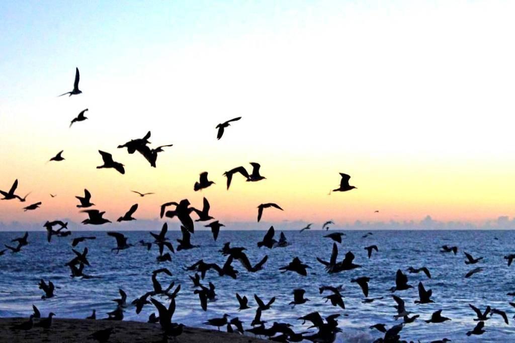 hundreds_of_birds_in_sunset_light