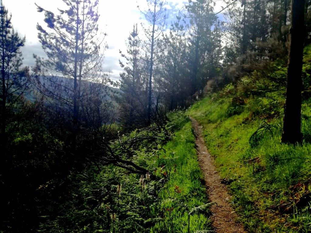 narrow_forrest_path