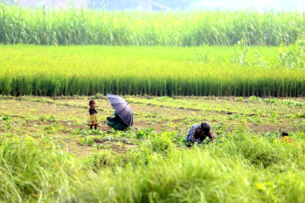 two_women_and_a_child_working_on_field_of_rice