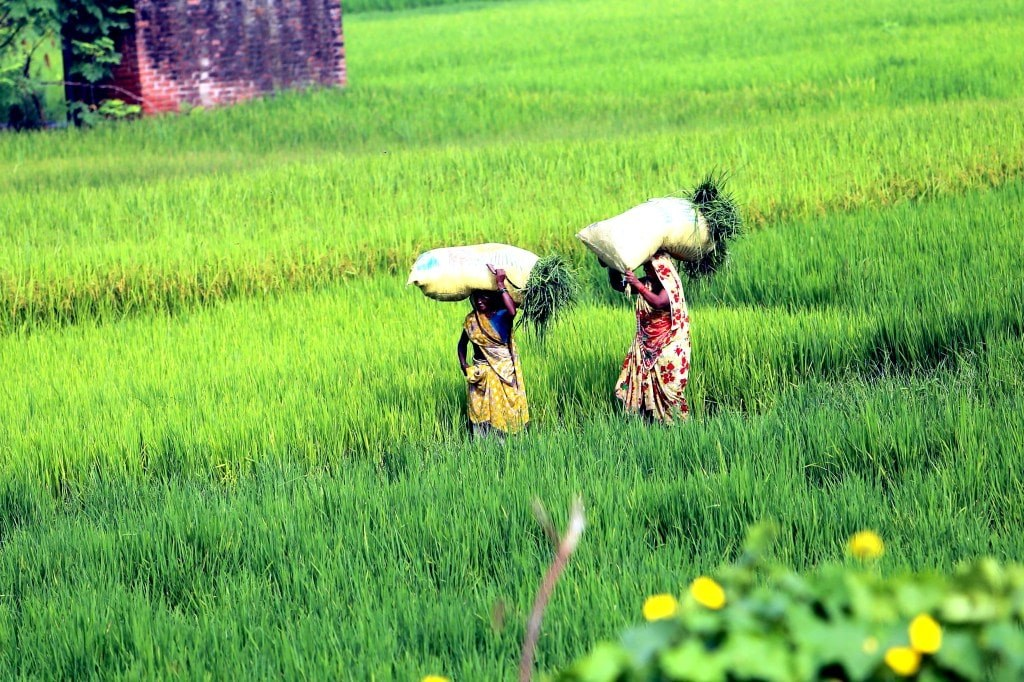 two_women_carrying_bags_full_of_plants