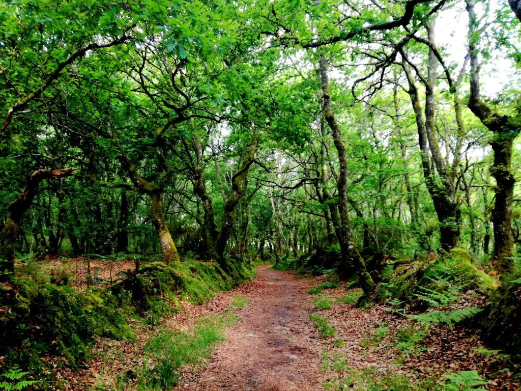 very_green_forrest_with_trees_covered_by_green_leafes