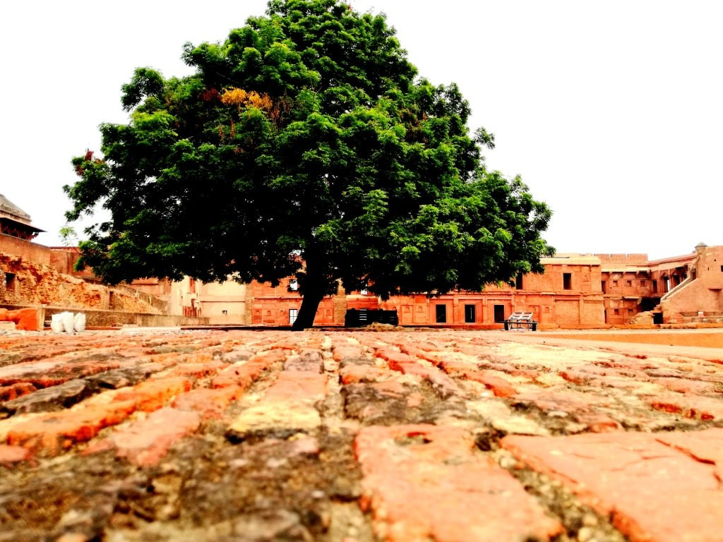 a_huge_tree_growing_on_a_red_bricked_ground