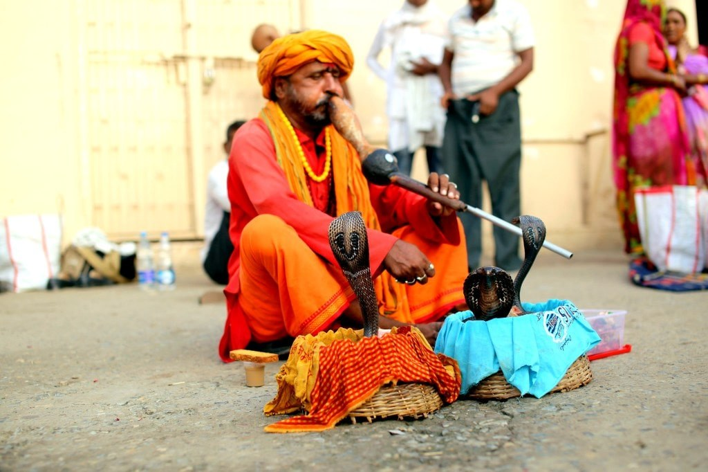 orange_dressed_men_playing_the_flute_with_a_snake_in_his_near
