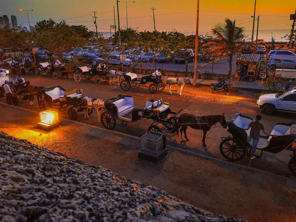 horses_in_the_light_of_sunset_in_cartagena_de_indias