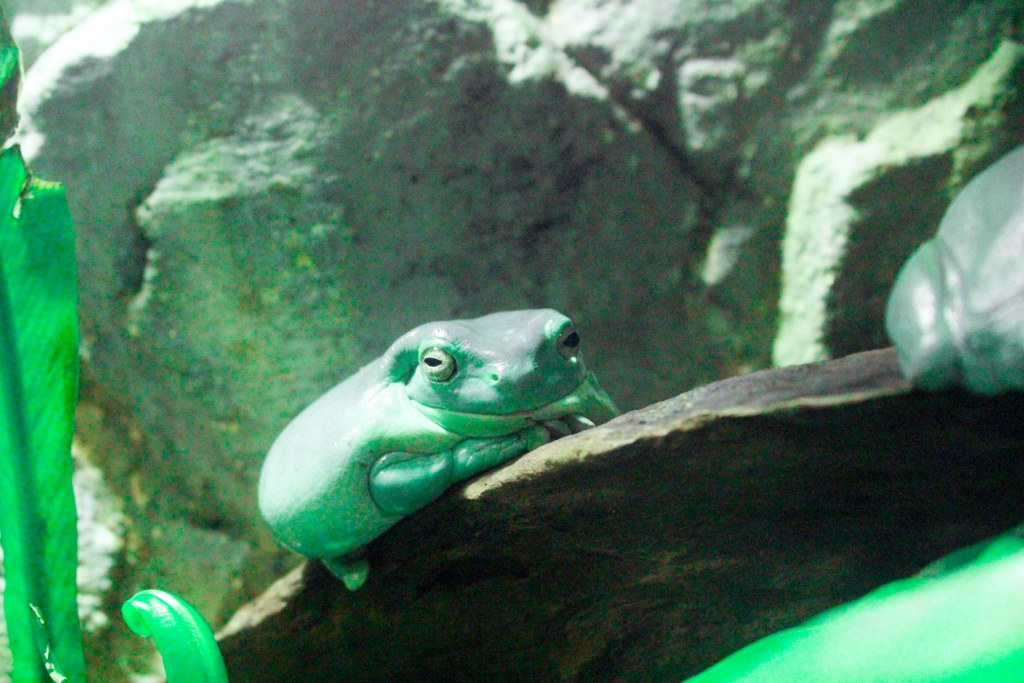 a_green_funny_frog_sitting_on_a_tree