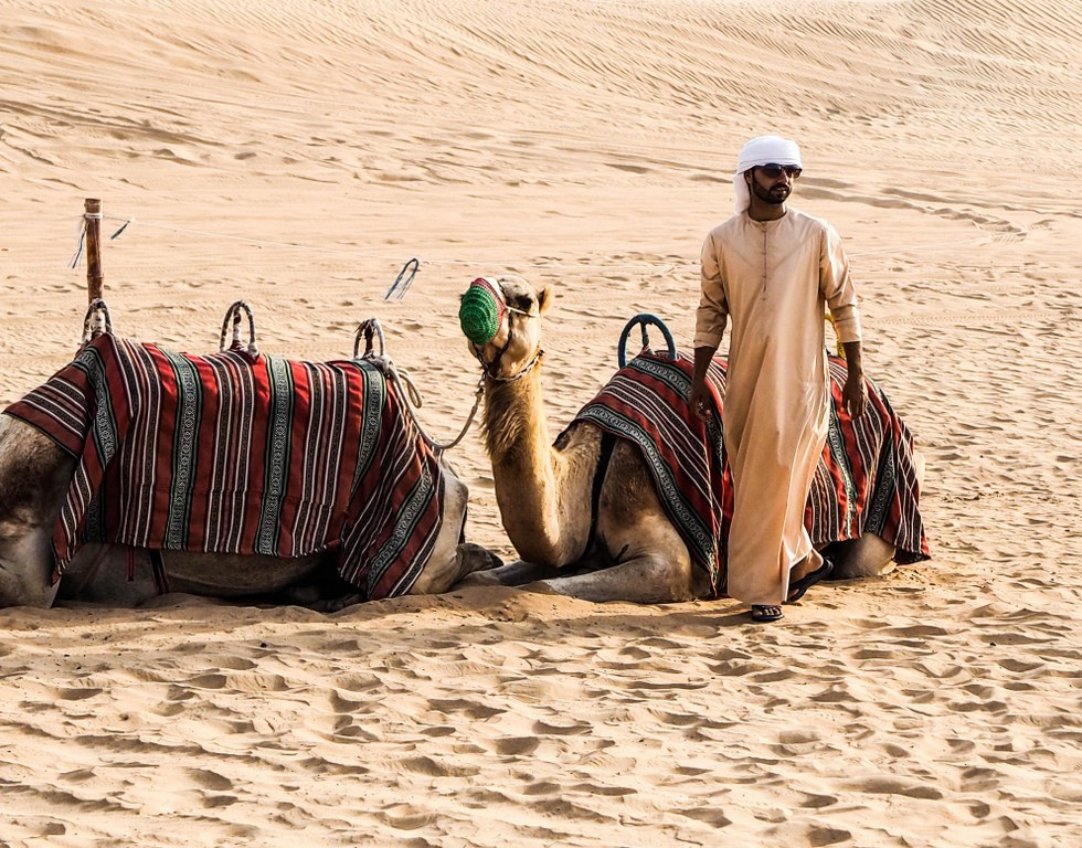 beduin_taking_care_of_his_two_camels
