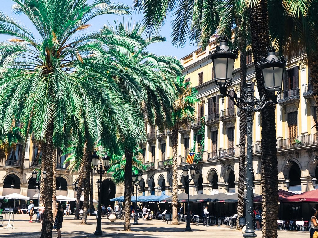 palm_trees_growing_on_a_square_in_barcelona