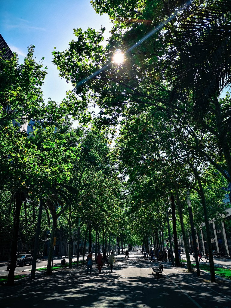 pathwalk_surrounded_with_huge_green_trees