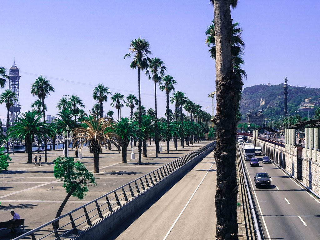 wide_road_with_palm_trees_growing_on_one_side