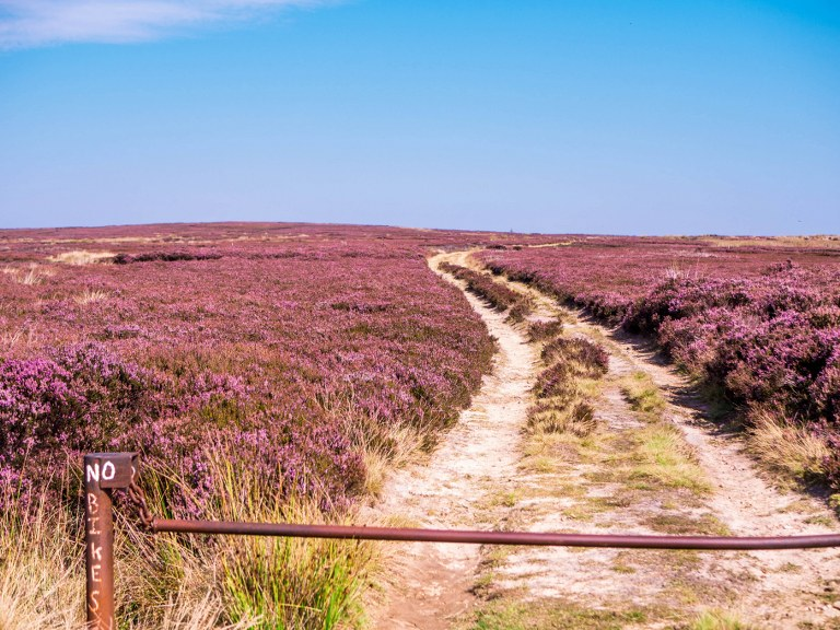 a_path_in_yorkshire_moors_national_park
