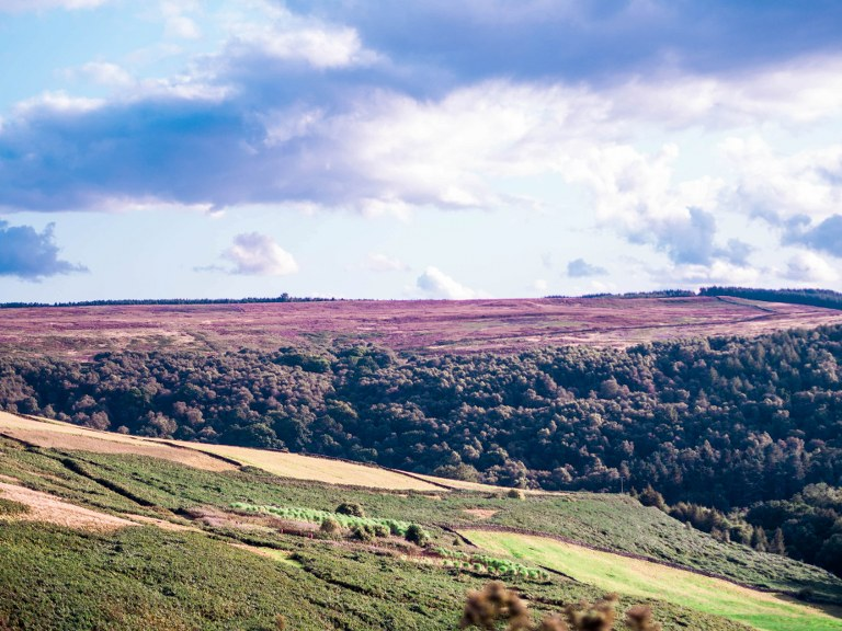 a_piece_of_purple_yorkshire