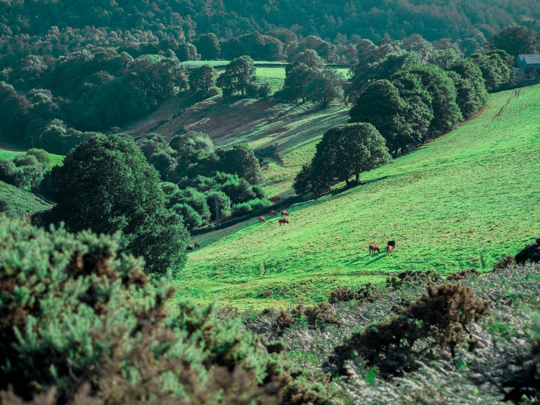 green_valleys_of_the_yorkshire_national_park