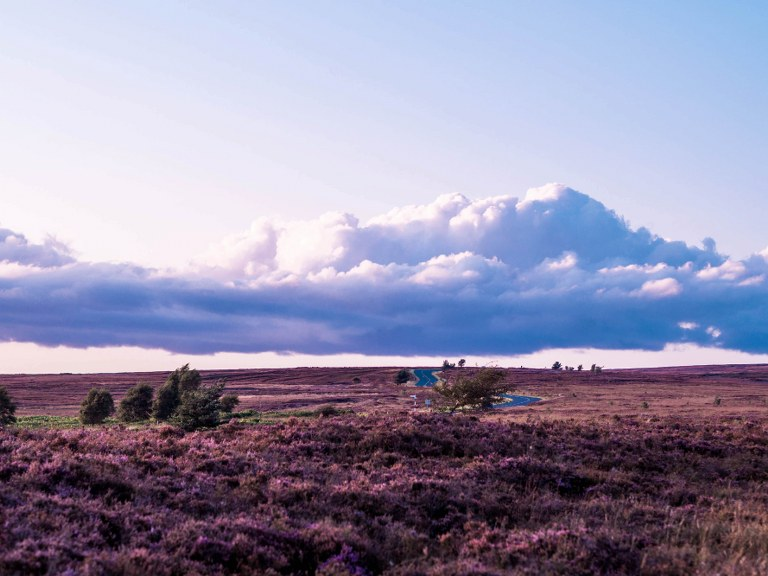 purple_yorkshire_moors_national_park