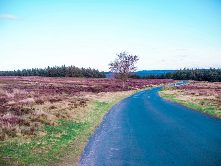 purple_yorkshire_national_park