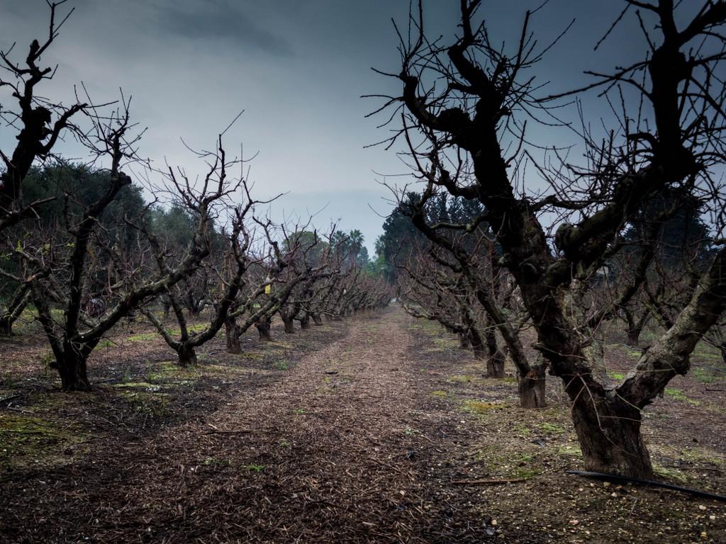 sady - alejki z drzewami bez lisci