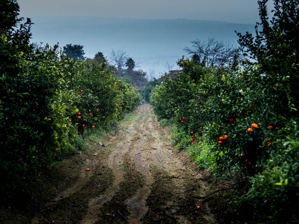 sady pomaranczowe