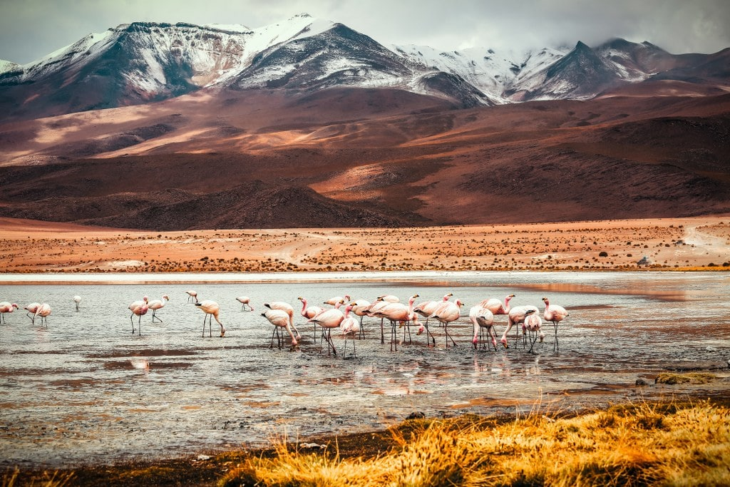 pink flamingos in mountain lake