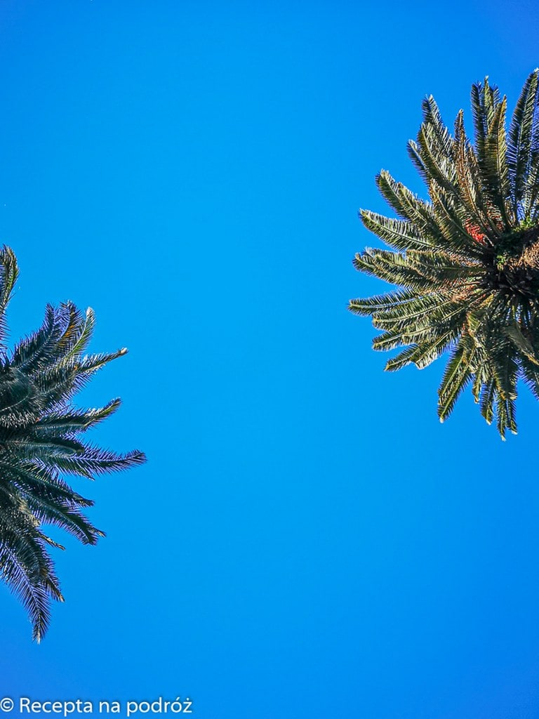 palm-view-montevideo