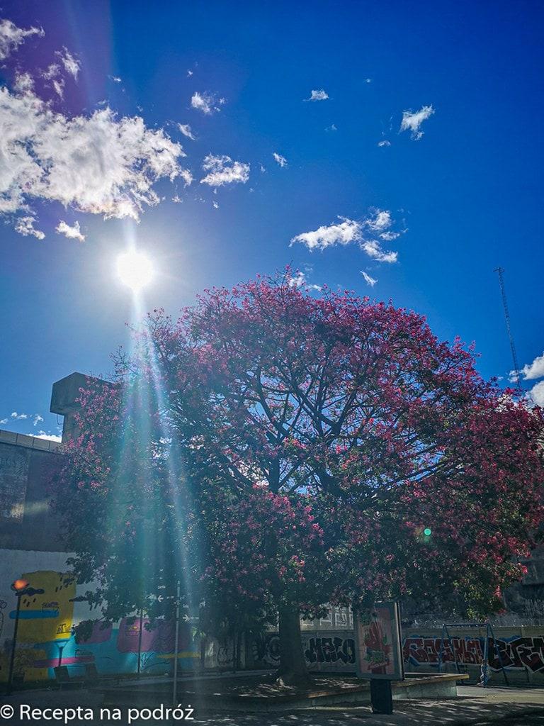sunlights-heading-to-blooming-purple-tree