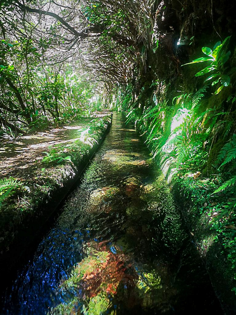 a_part_of_levada_in_madeira_768x1024