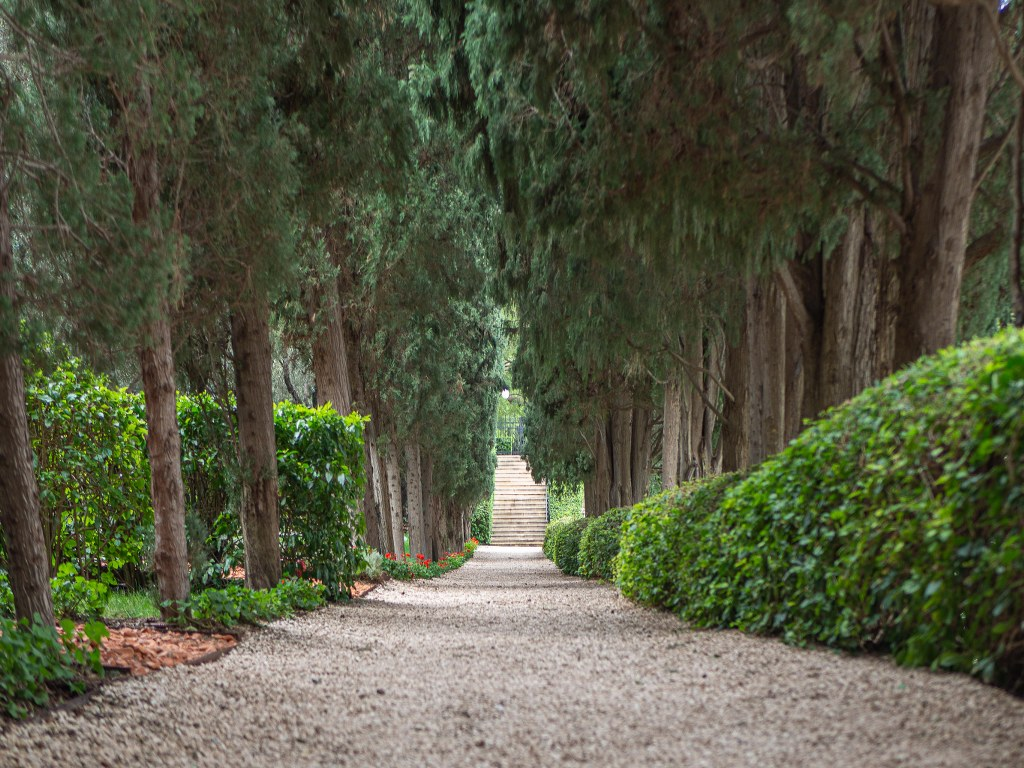 a_straight_path_surrounded_with_high_trees