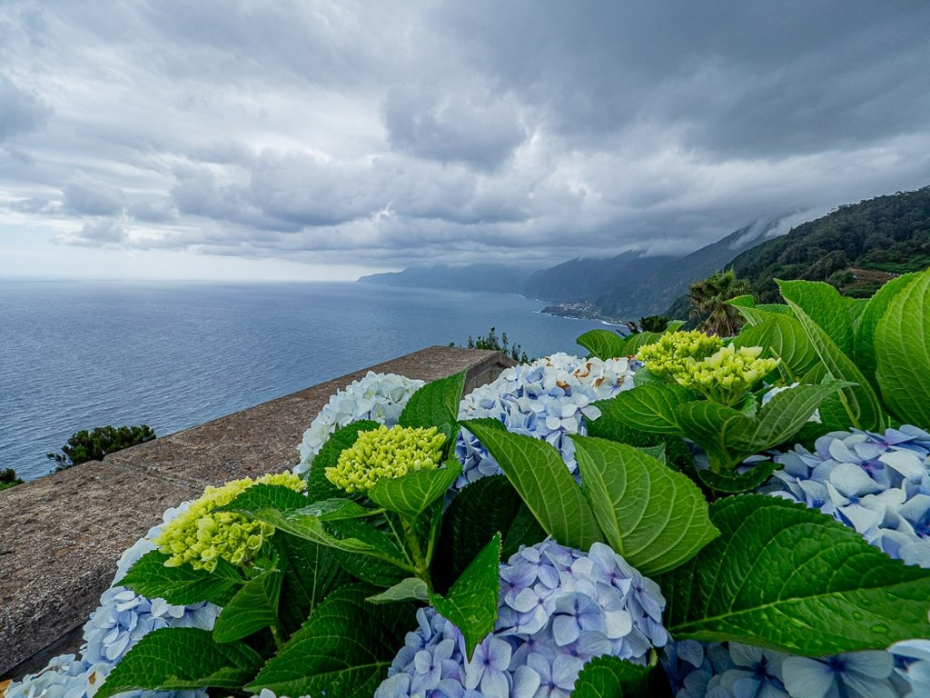 blue_flowers_growing_on_the_slope_of_the_madeiran_cliff