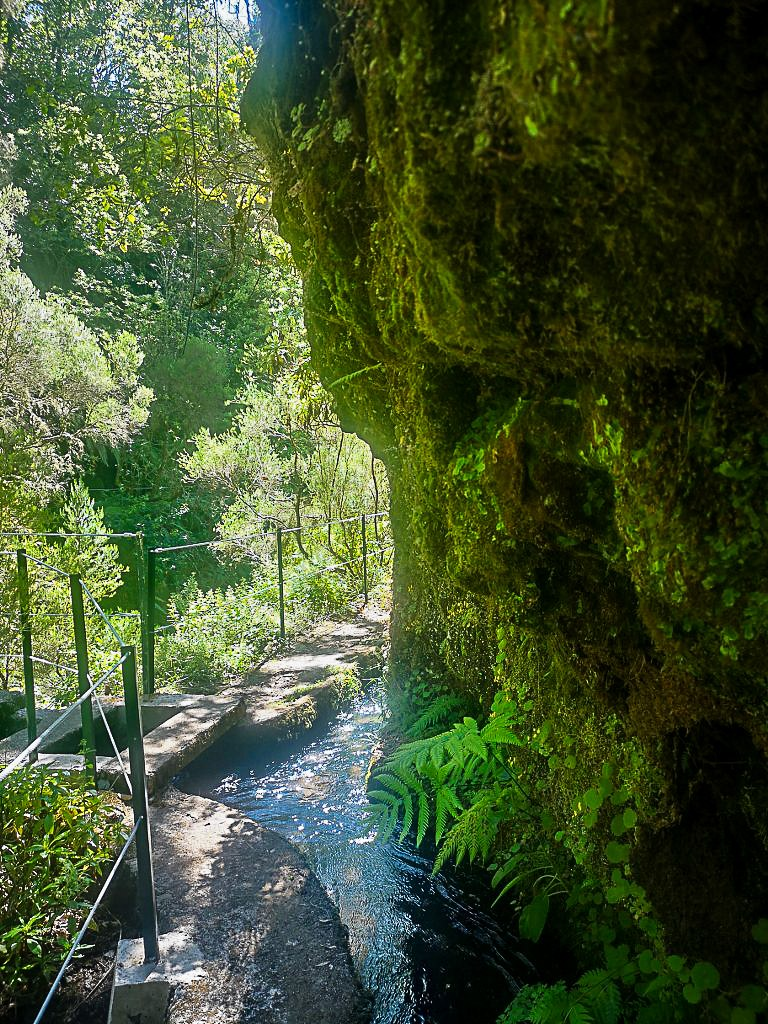 green_mountain_trail_in_madeira_768x1024