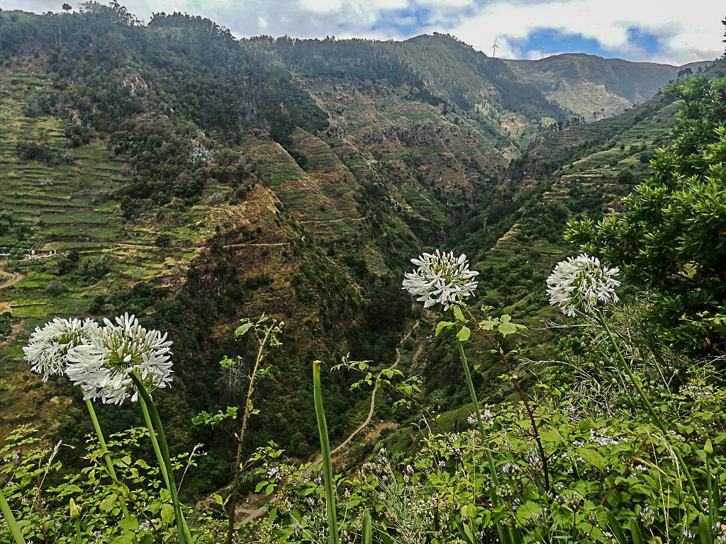green_surroundings_of_one_of_madeira_levadas_1024x768