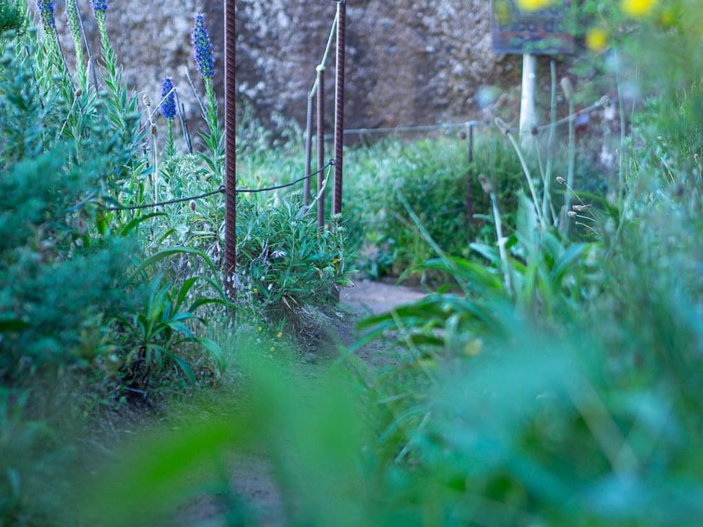 madeira_green_plants