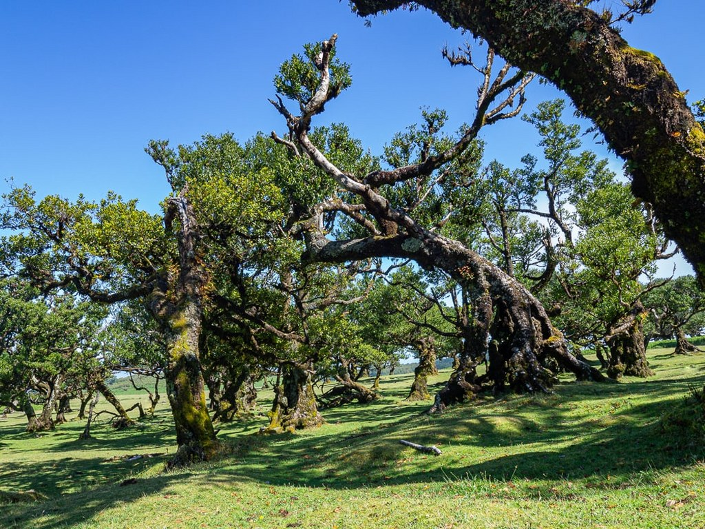 oddly_twisted_trees_in_one_of_the_oldest_forrests_in_the_world