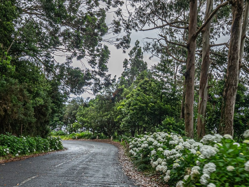 road_with_a_roadside_With_rich_vegetation