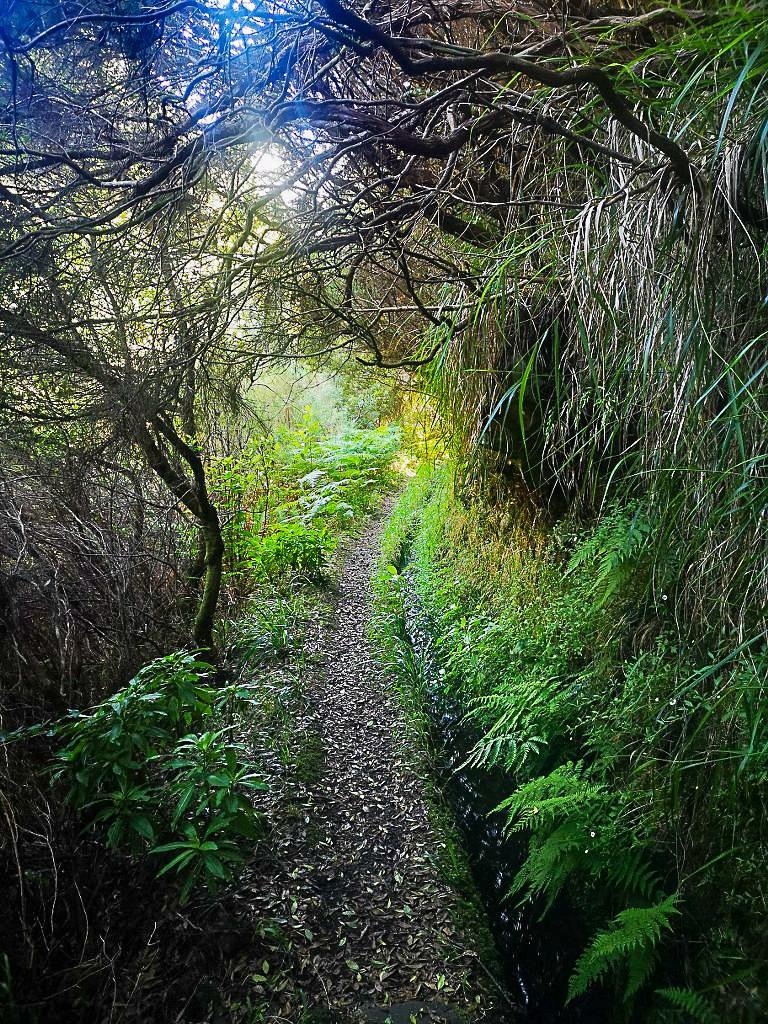 trail_leading_through_madeiras_green_heart_768x1024