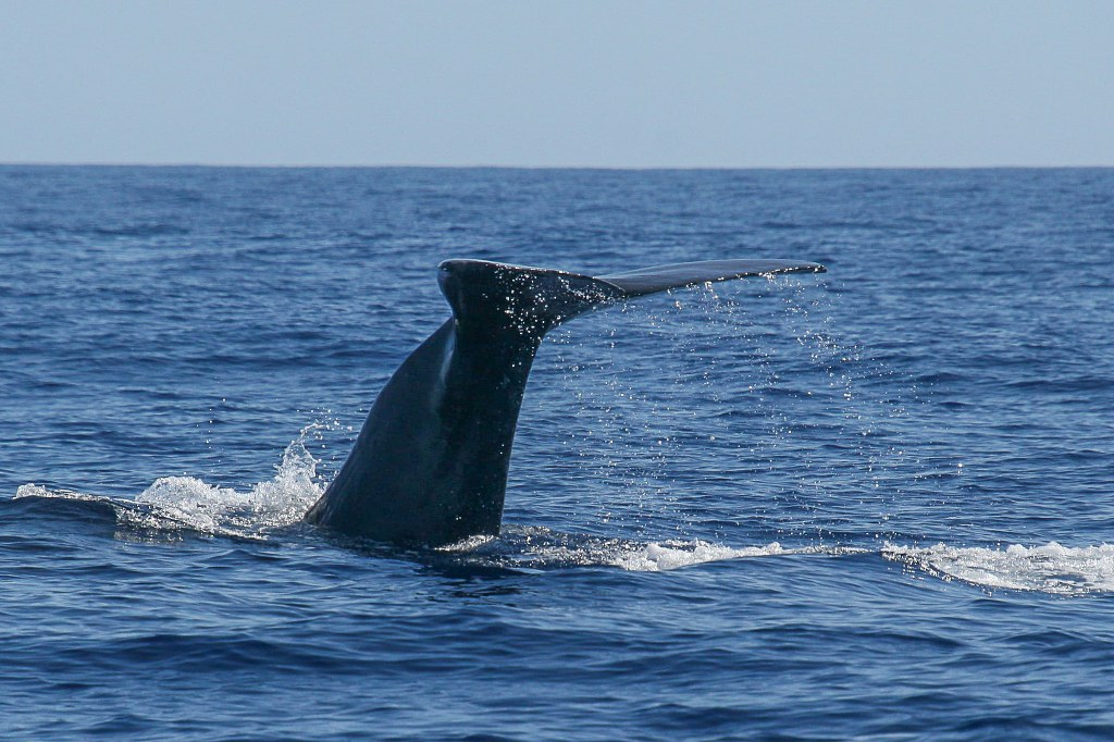 whales_tail_waving_from_water_1024x682