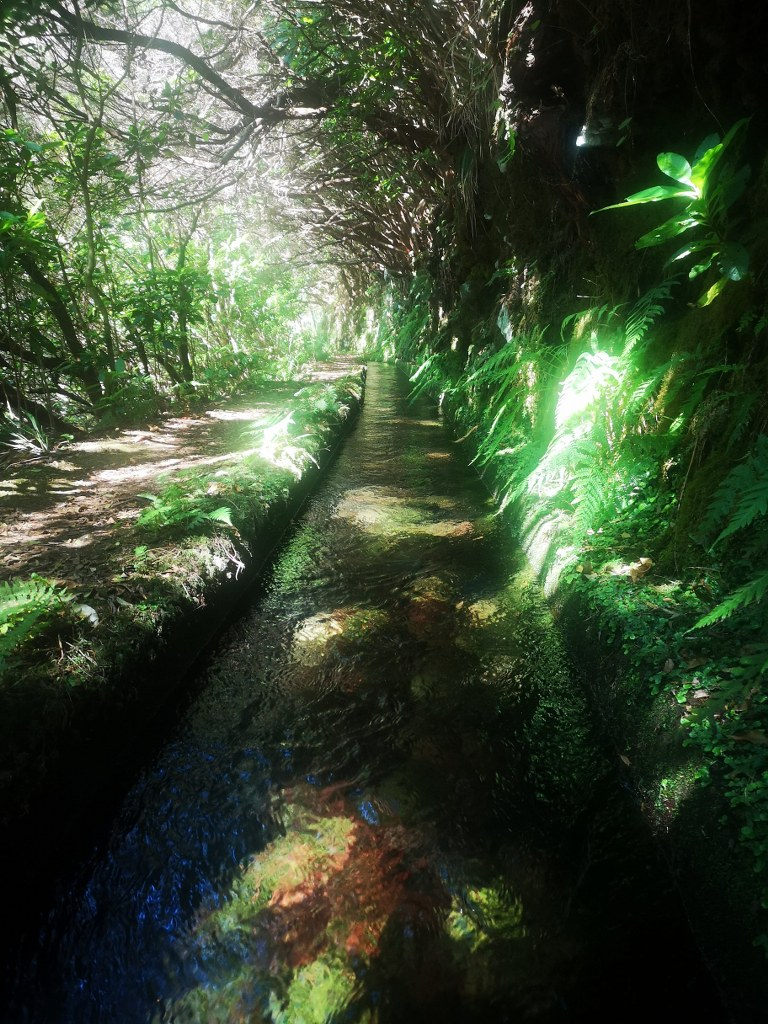 a_piece_of_one_of_green_levadas_in_the_island_of_madeira