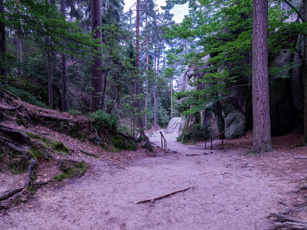 a_path_leading_between_huge_trees