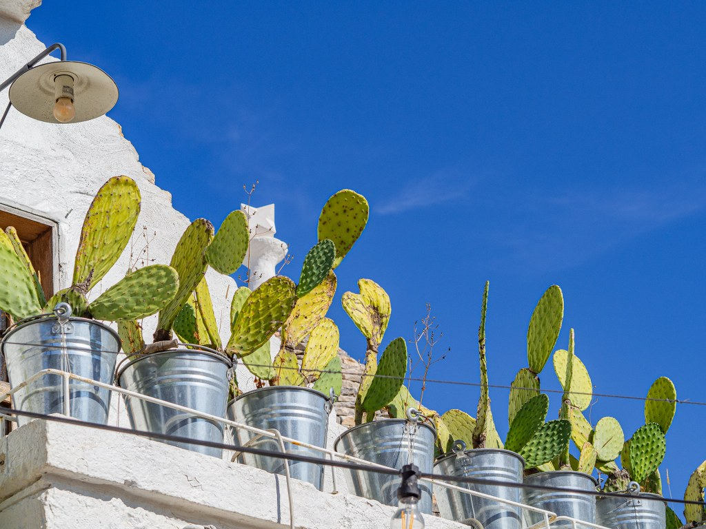 cactus_growing_in_little_metalic_pots_on_roofs_of_a_house