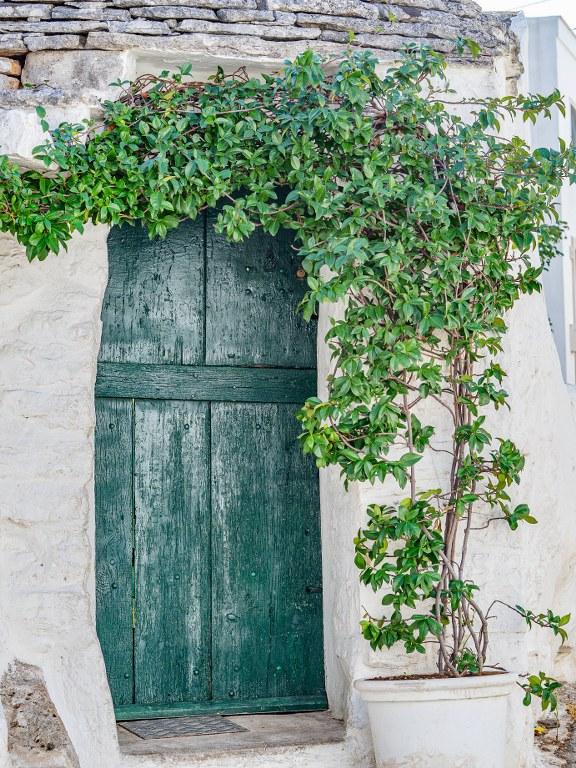 vine_growing_around_green_doors