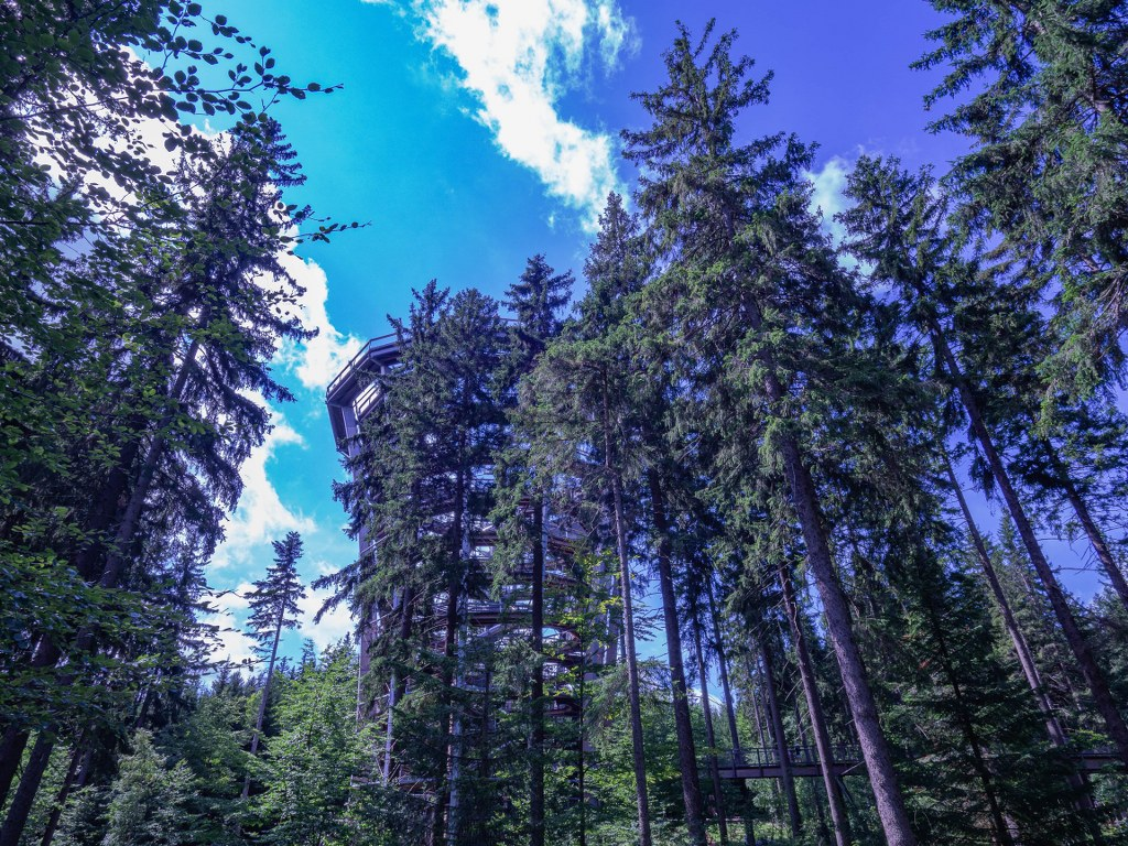 wooden_contruction_leading_above_trees