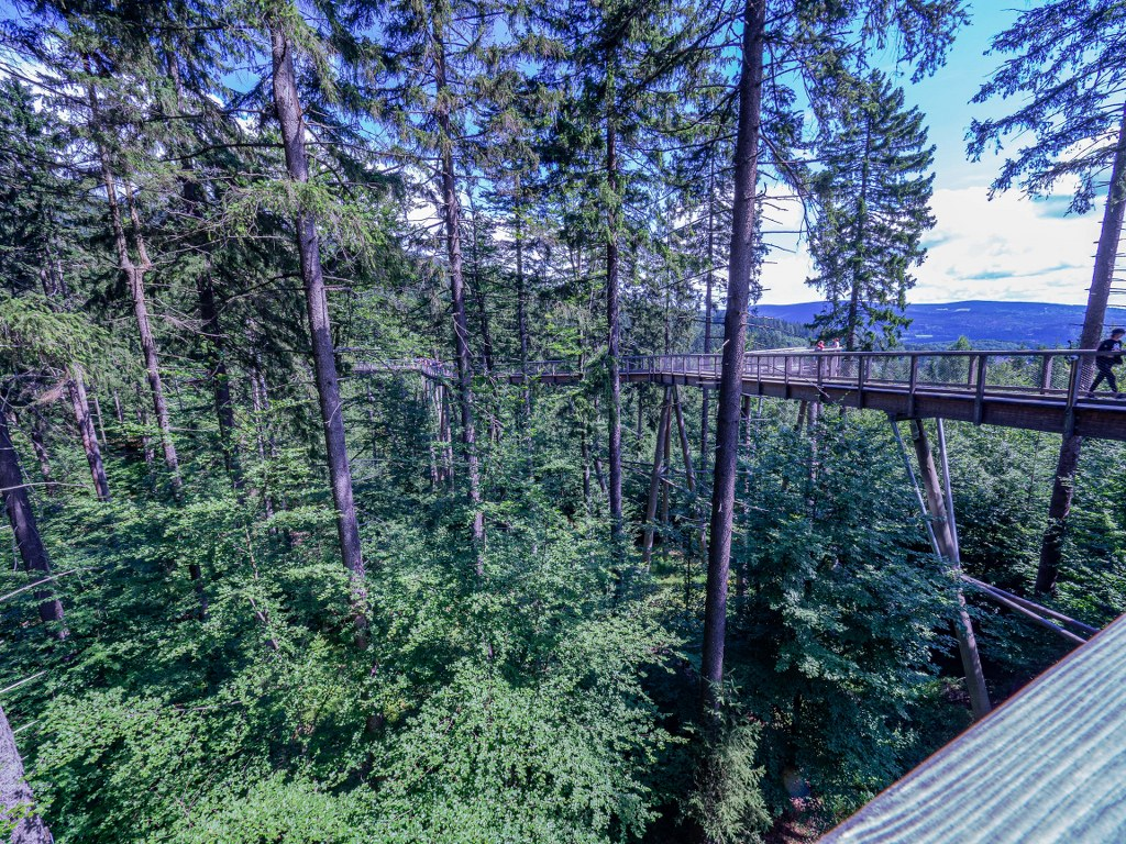 wooden_path_leading_above_trees